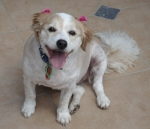 Sandy when she was well & happy after her grooming